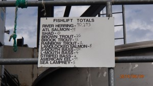 fish lift count